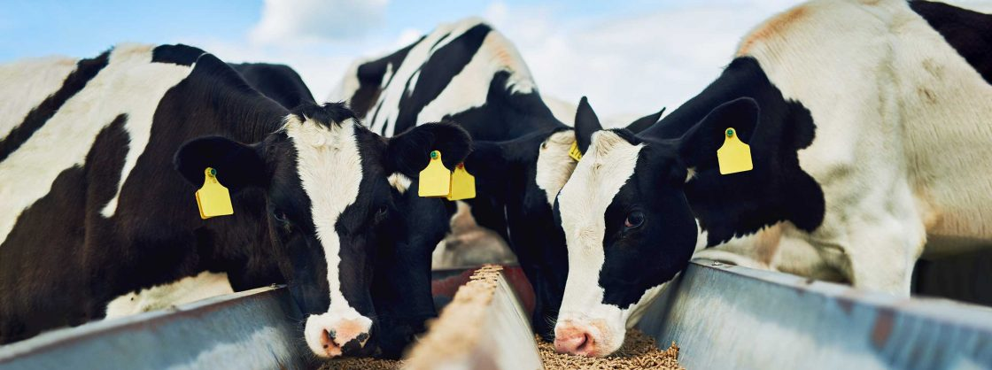 Animal-Nutrition