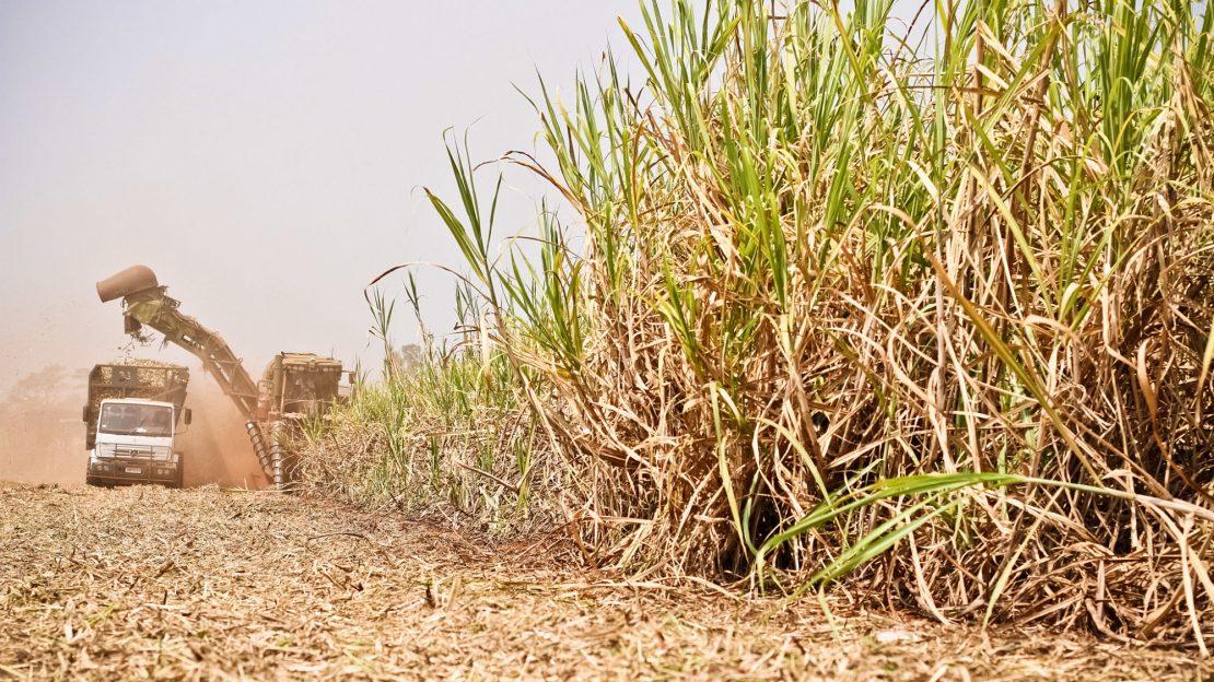 Plantio, manutenção e produção da cana-de-açúcar na Guarani S.A