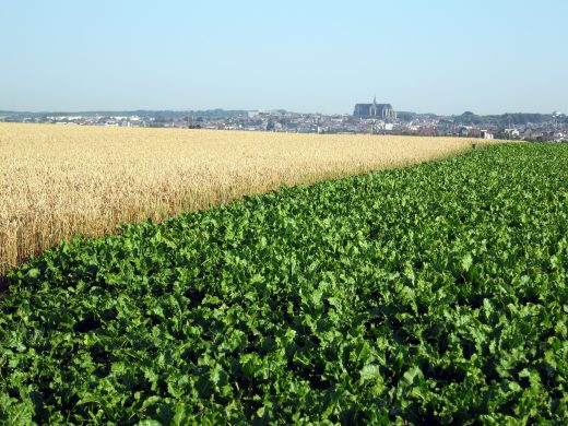 Tereos starts organic sugar production in France!