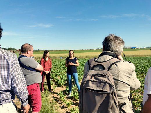 Première campagne de betteraves bio en France pour Tereos