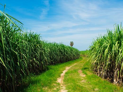 Práticas agrícolas sustentáveis: novas certificações internacionais