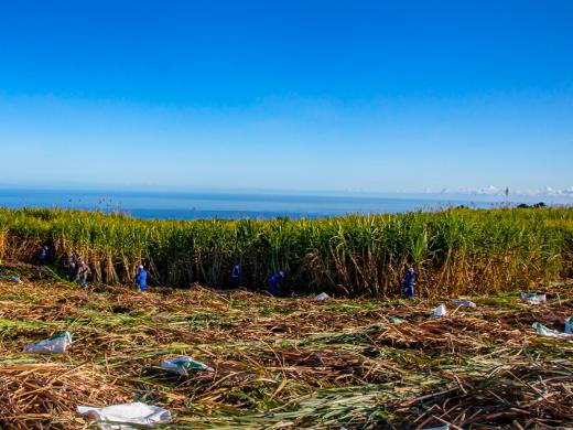 eRcane celebrates 90 years of sugarcane know-how
