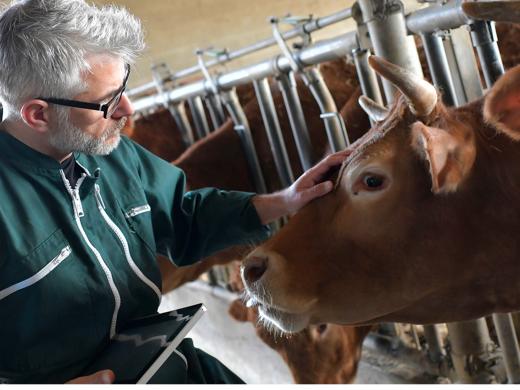 10 choses à savoir sur la nutrition animale chez Tereos