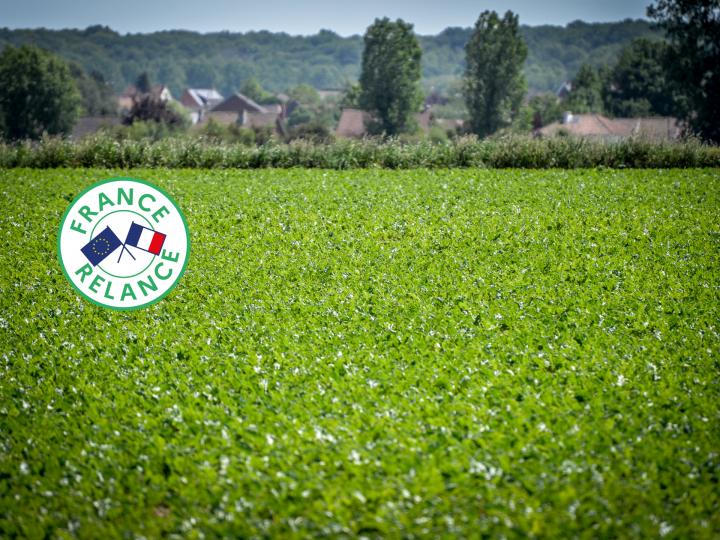Tereos propose des diagnostics carbone aux jeunes agriculteurs