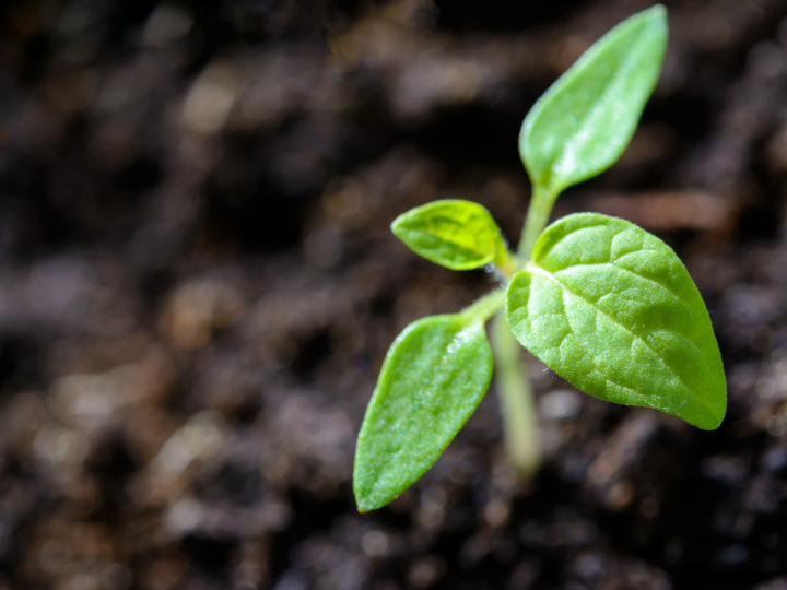 Stevia: Tereos expands its range
