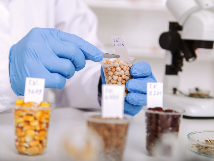 Pourquoi miser sur le développement des protéines végétales?